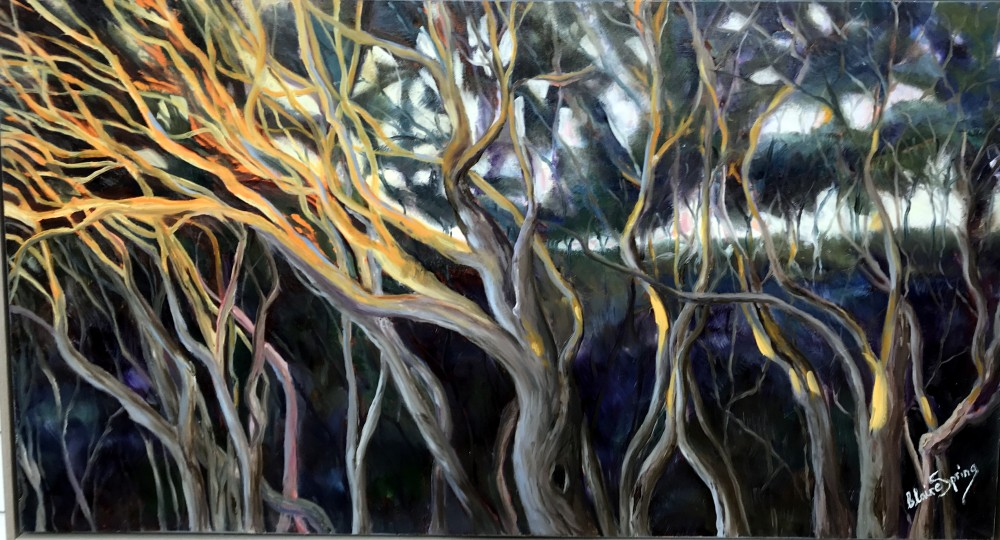 Moonah Trees at Sunset $1500 by Claire Spring