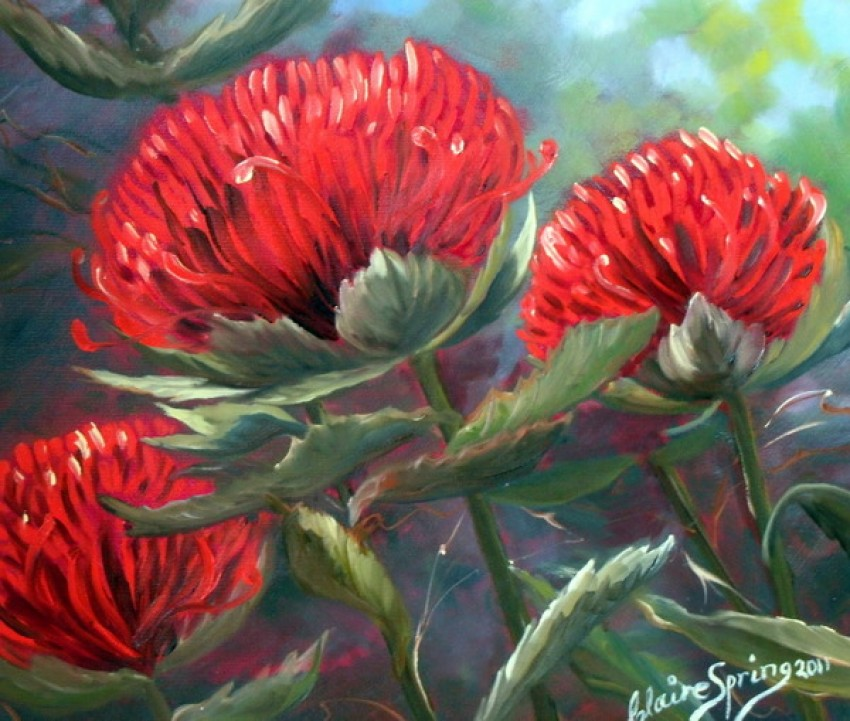 Red Waratah by Claire Spring